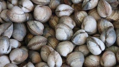Photo de Tétouan/Chefchaouen: la récolte des coquillages interdite