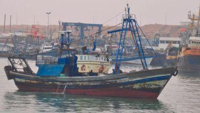 Photo de Pêche. Le poulpe fait les beaux jours de Dakhla