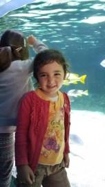 A l'aquarium de La Rochelle