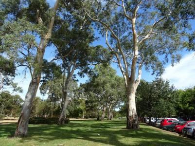 Adelaide0024