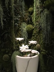 plante du spa aquamoon