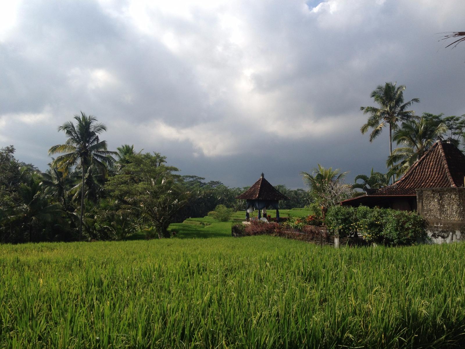 voyager seule à bali et découvrir les rizières