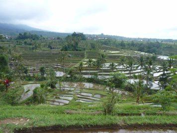 les jatiluwih rice paddies à ubud sont au patrimoine de l'unesco