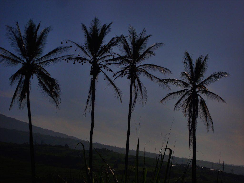 cocotiers-etang-sale