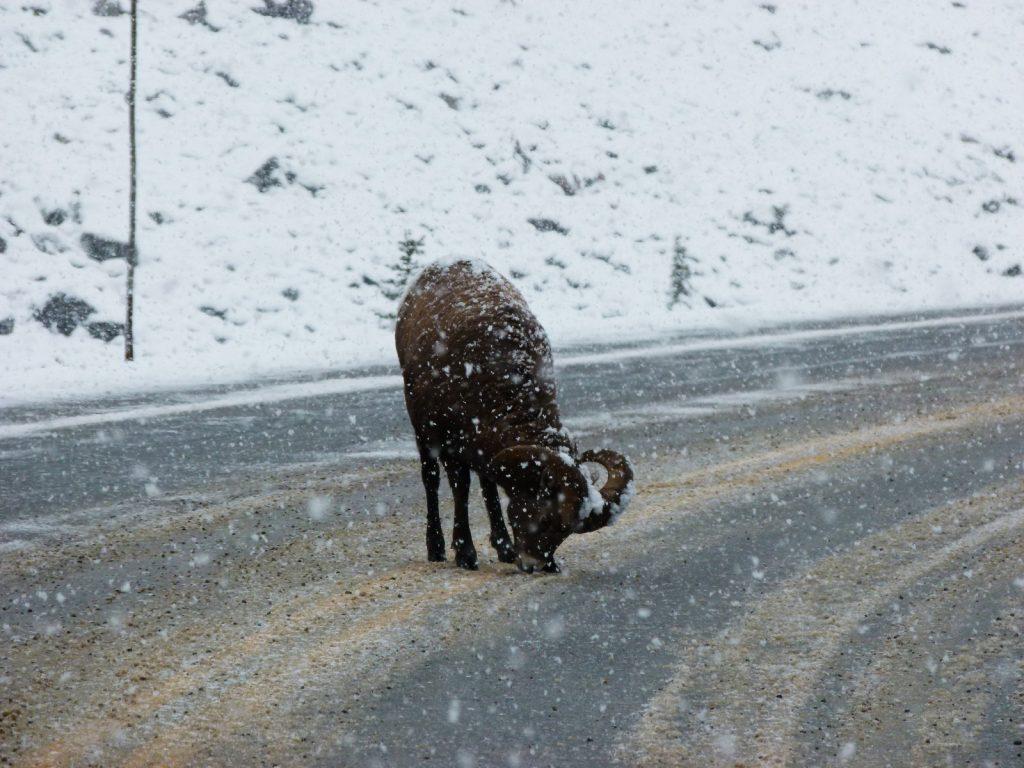 promenade-des-glaciers-alberta-canada