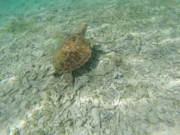 tortue à gili parmi les visites incontournables à bali
