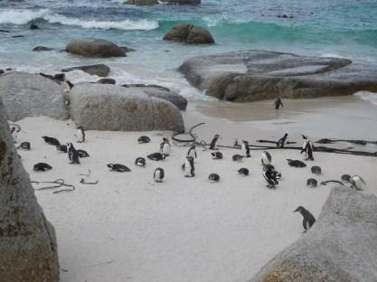 pingouins-modif