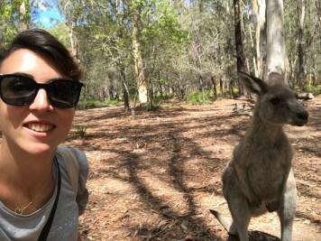 australie-sydney-morisset-park-fanny-selfie-kangourou