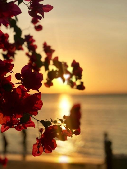 indonesie-jepara-sunset-fleurs