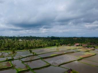 voyage-a-bali-ubud-rizieres-drone
