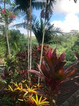 voyage-a-bali-ubud-tanah-merah-nature