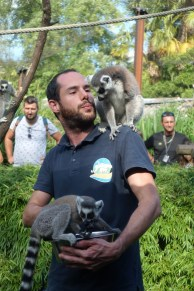 que-faire-dans-le-bearn-zoo-asson-lemurien-nourriture