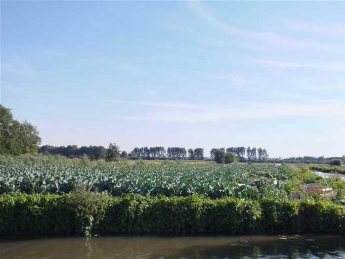 Le marais cultivé à Saint-Omer