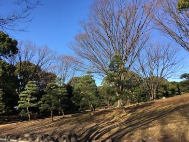 Dans le parc de Yoyogi