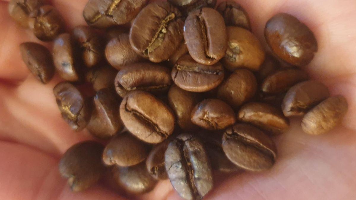 Grains de café cubain