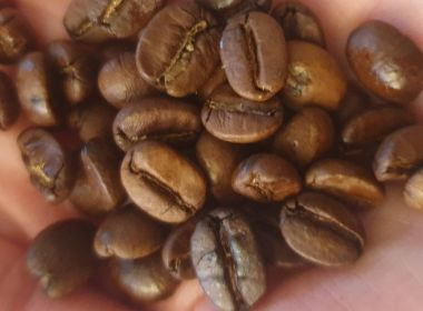 Grains de café cubain