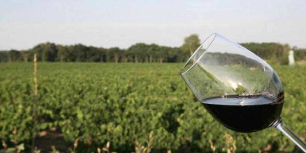 Pourquoi il faut investir dans le vin anglais ?