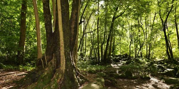 La forêt, l'arme anti-réchauffement climatique ?