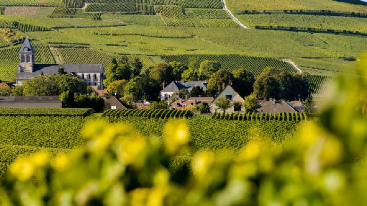 La viticulture française au pied du mur face à l'enjeu des pesticides