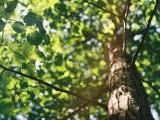 L'arbre, le meilleur ami de l'Homme pour le carbone ?