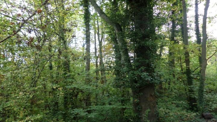 Nouveau record de surface pour la forêt française