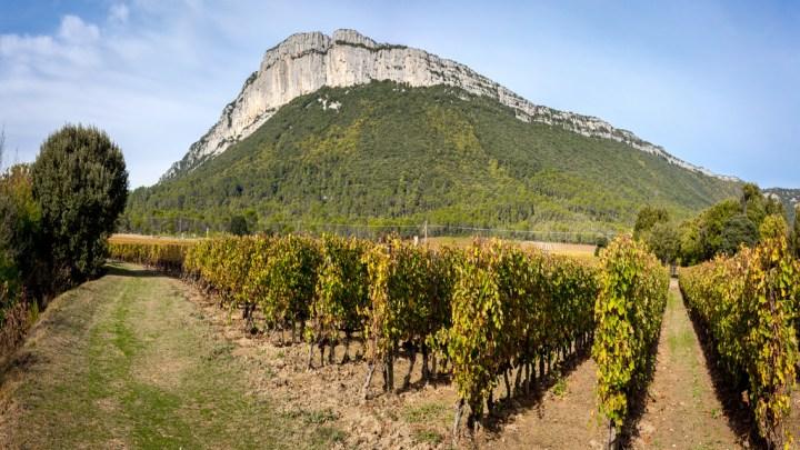 Dans le Languedoc, les viticulteurs s'adaptent déjà au changement climatique