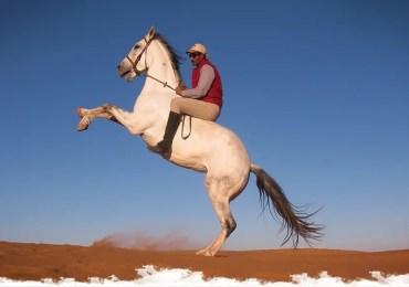 Maroc : le Français qui murmure à l'oreille des chevaux