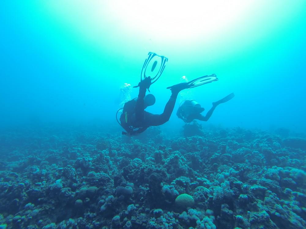 Jour 2 Plonge Aqaba Gorgon 1 Amp 2 Les Furet Voyagent