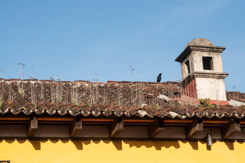 toit antigua
