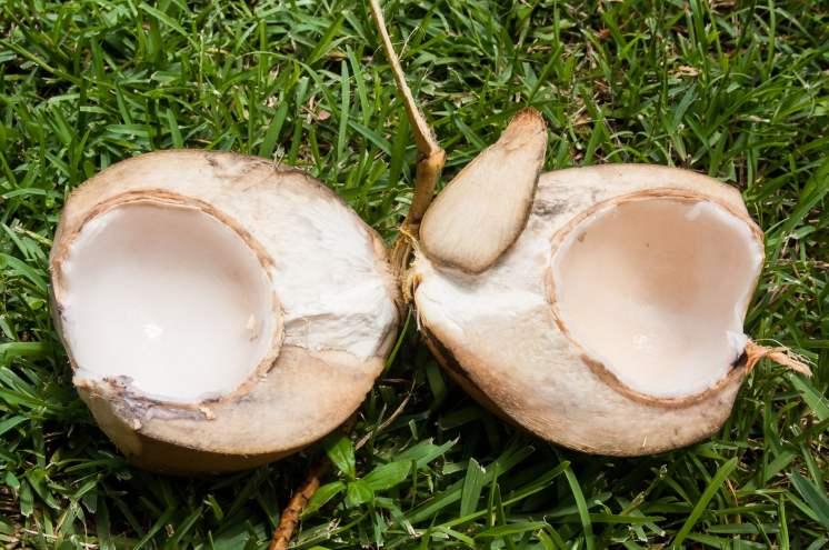 Coconut noix de coco livingston