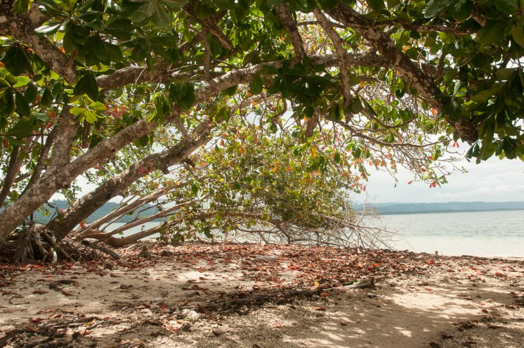 Plage paradisiaque de Cahuita