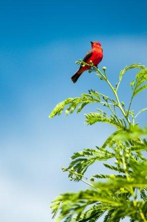 tatacoa oiseau bis