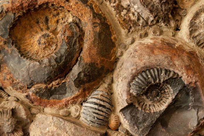 villa-leyva-deux-fossile
