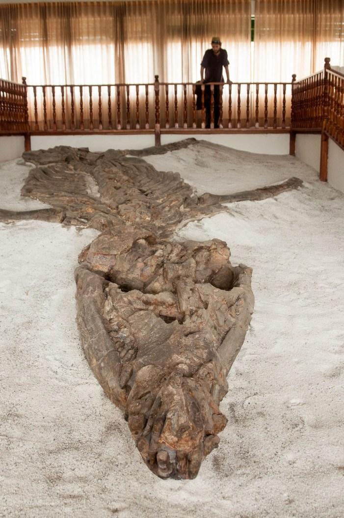 villa-leyva-fossile-gros
