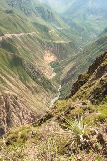 Canyon de colca rivière
