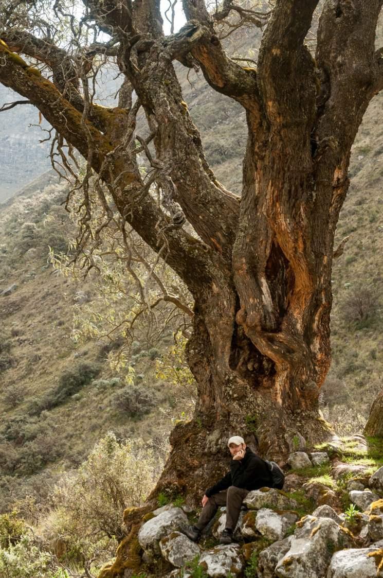 pause arbre