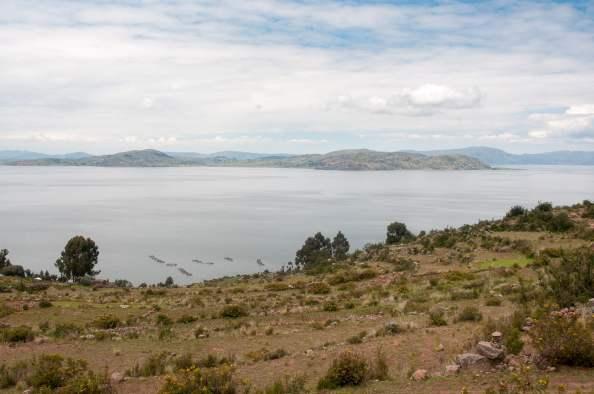 lac titicaca, pérou, élevage, truite