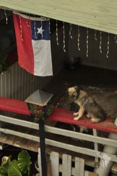 chien drapeau maison