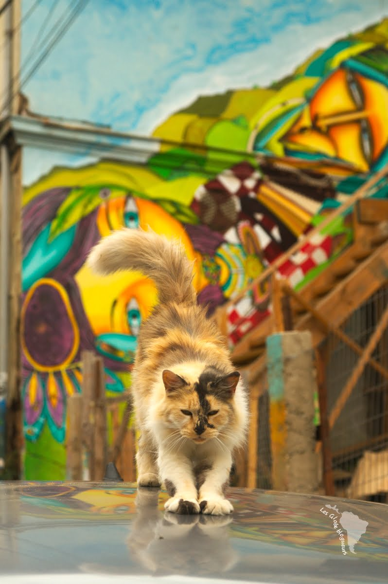 chat voiture graffiti