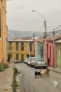 Valparaiso - gang de chien