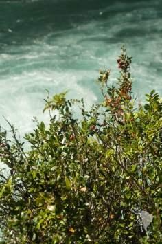 végétation sur les rives des rapides