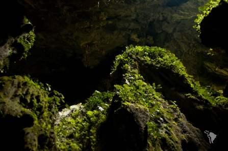 grotte de niah en malaisie