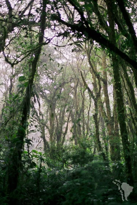forêt brumeuse monteverde costa rica