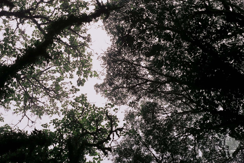 forêt monteverde costa rica