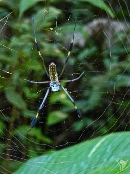 araignée manuel naturel