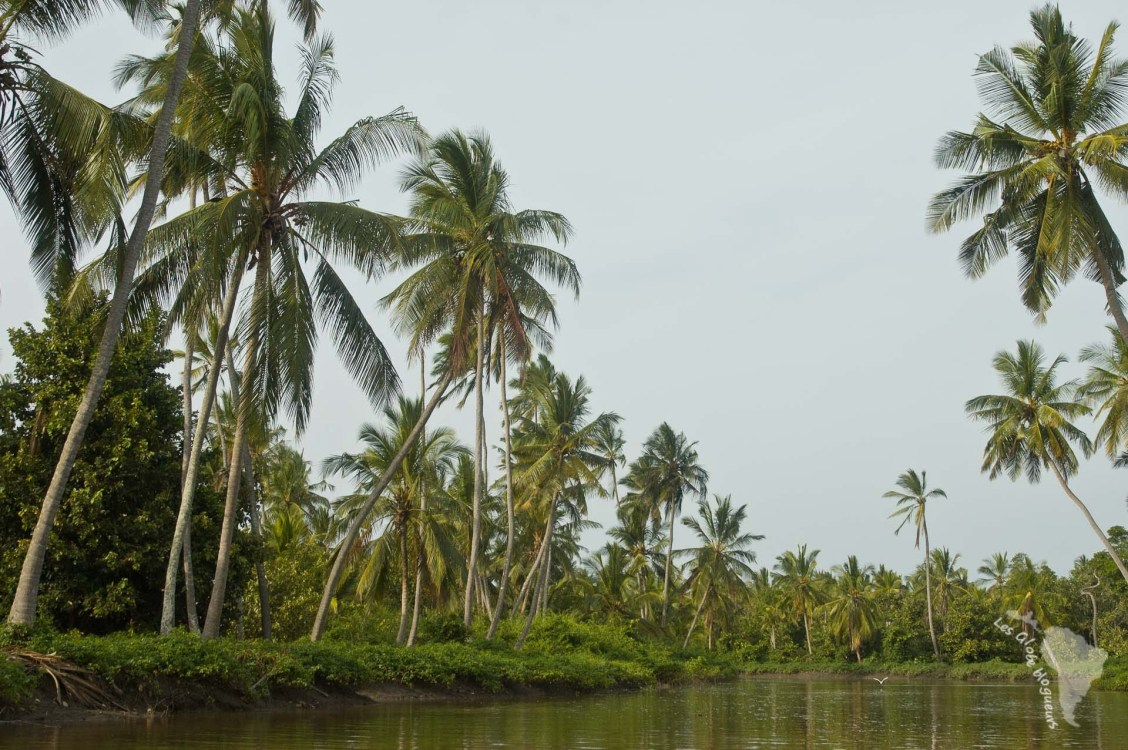 rivière crocodile tanzanie