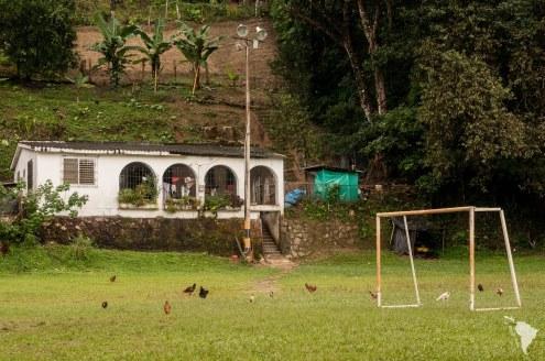 Le terrain de foot occupé par les poules