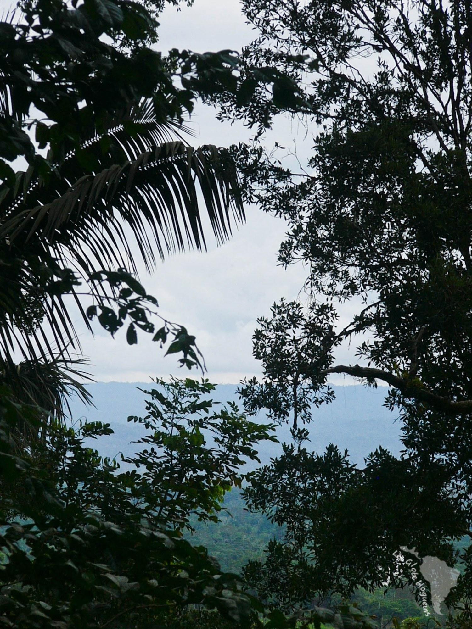 L'horizon sans fin de l'amazonie