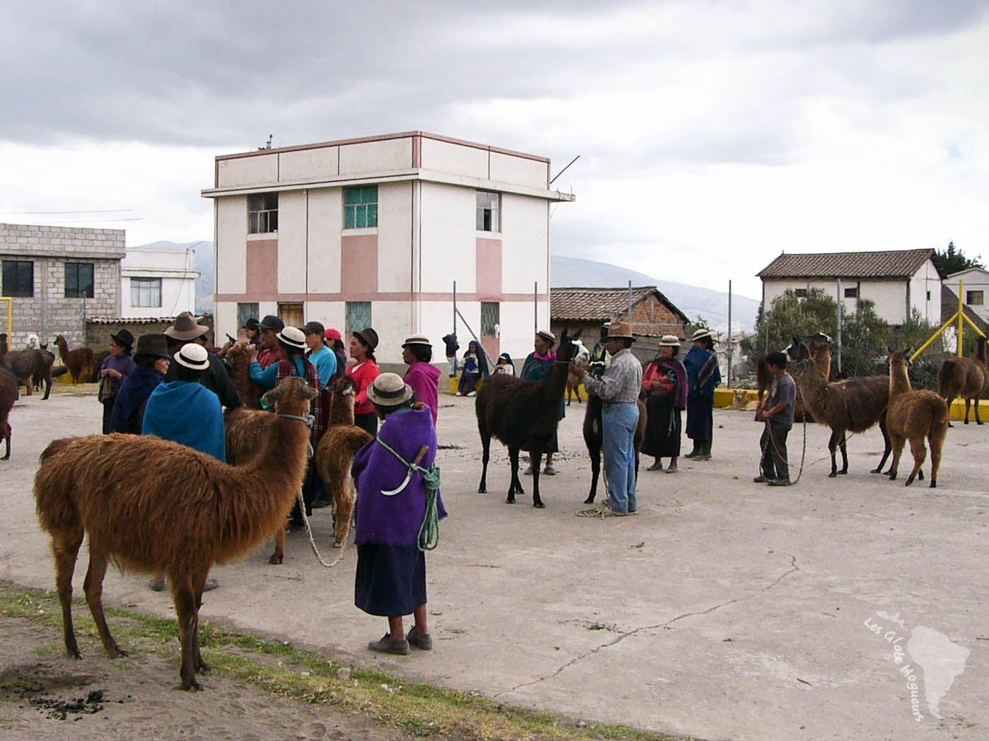 Rendez vous des lamas
