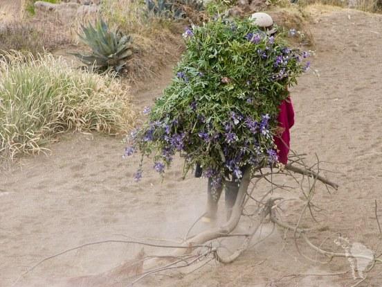 Une femme porte des fourrages pour les bêtes